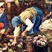 Picking potatoes, 1956