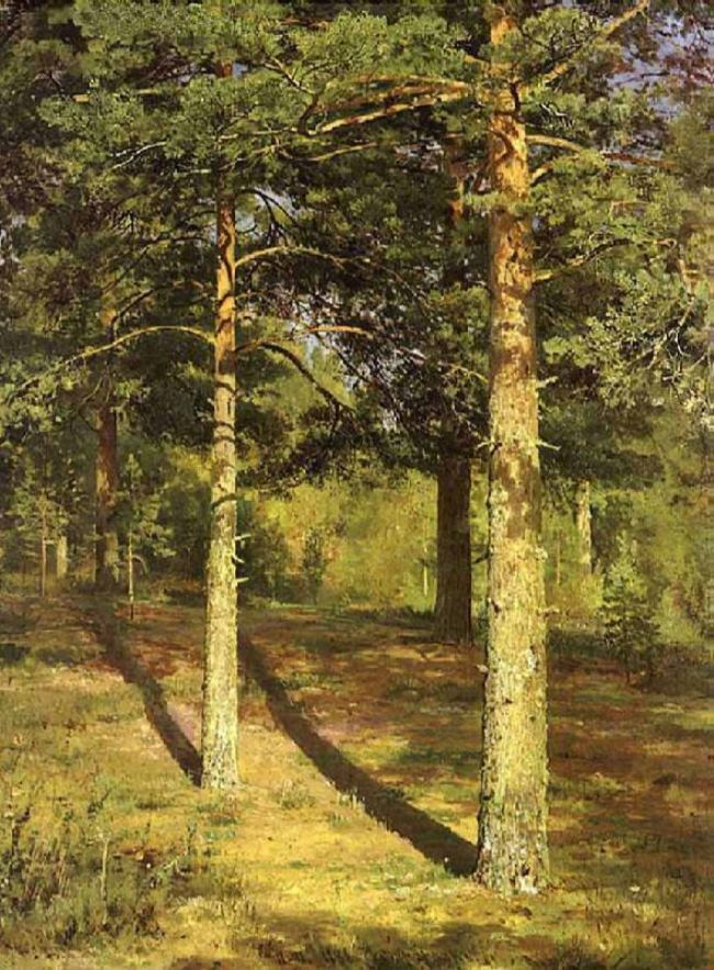 Pines, lit by the sun, 1886