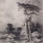 Old pines. 1854