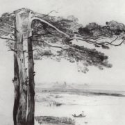 Pines from Gusarev. 1850