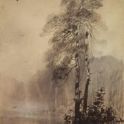 Pines on the shore of the lake. 1880-1890s