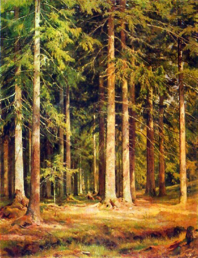 A fir forest. 1891