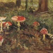 Amanita, 1880s