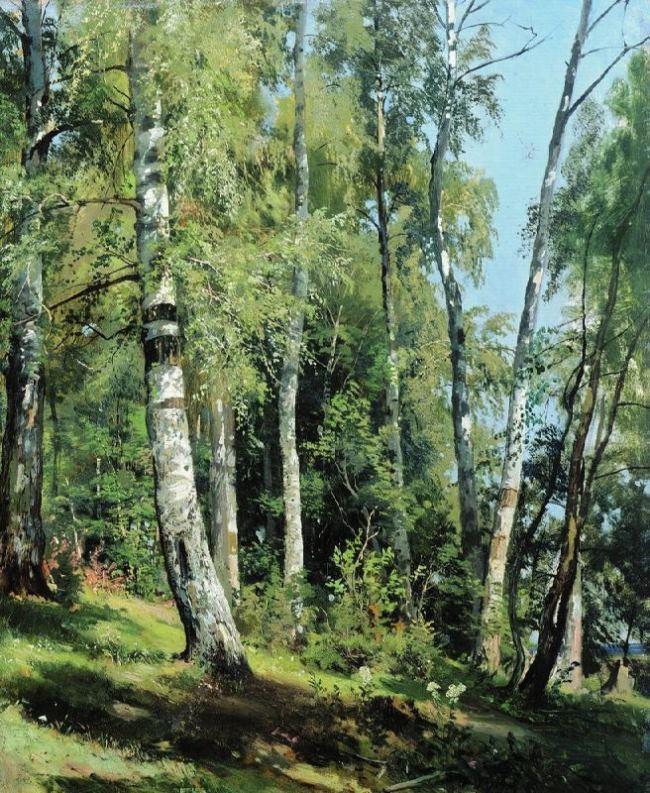 Birch Grove, 1896