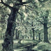 Oak Grove, 1893