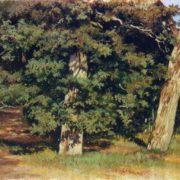 The oaks. Etude