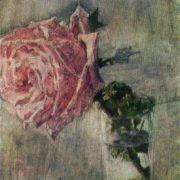 Rose. 1904
