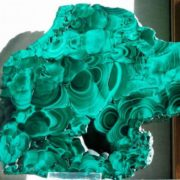 Great malachite