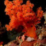 Colorful coral kingdom